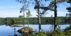 tłumacz szwedzki